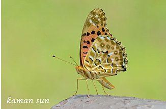 孫嘉雯拍攝的大自然相片2