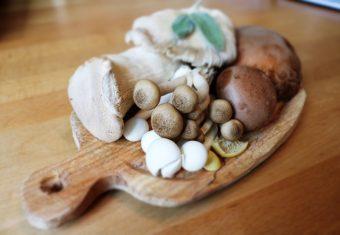 [繼續行.繼續學.世界不停頓系列] <br /><strong>菇菌之日常 - 從森林到餐桌</strong>